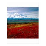 Park Brilliant Colors Of Denali Alaska Postcard