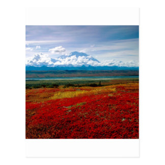 Park Brilliant Colors Of Denali Alaska Postcard