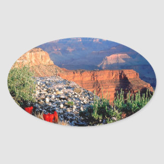 Park Claret Cup Cactus Grand Canyon Oval Sticker