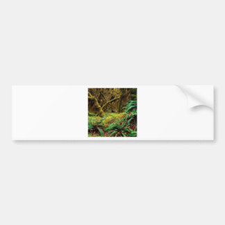 Park Hall Of Mosses Trail Olympic Car Bumper Sticker