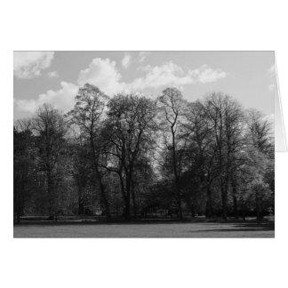 Park Landscape, Bute Park, Cardiff, Wales, UK Greeting Card