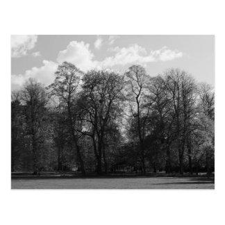 Park Landscape, Bute Park, Cardiff, Wales, UK Postcard