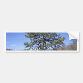 Park Pine Bumper Sticker