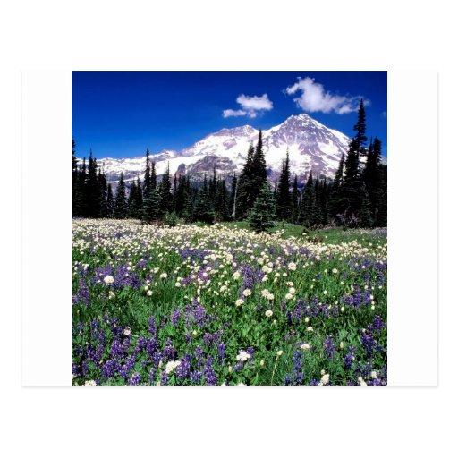 Park Seasonal Beauty Rainier Postcard