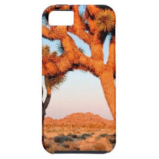 Park Sunrise Joshua Tree Monument California iPhone SE/5/5s Case