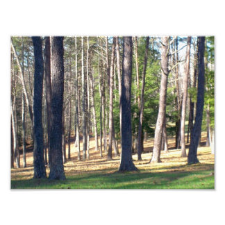 Park Trees Photo Print