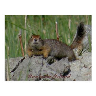 Parkee Squirrel on a Rock, Unalaska Island Post Cards