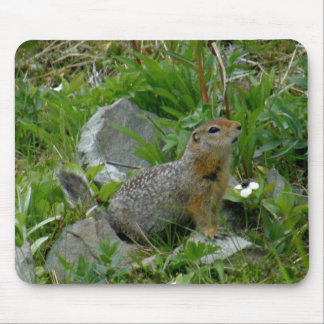 Parkee Squirrel on Unalaska Island Mouse Pad