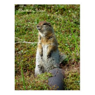Parkee Squirrel on Unalaska Island Postcards