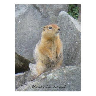 Parkee Squirrel Standing Up, Unalaska Island Postcard