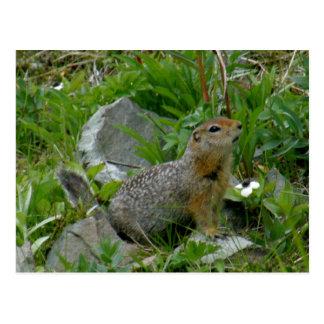 Parkee Squirrel, Unalaska Island Post Cards