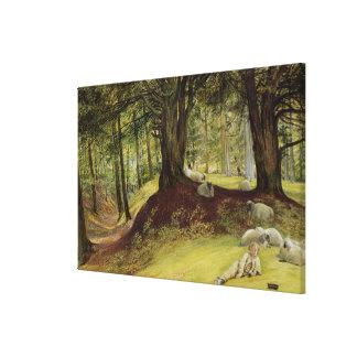 Parkhurst Woods, Abinger, Surrey Canvas Print