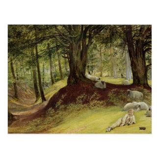 Parkhurst Woods, Abinger, Surrey Postcard