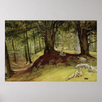 Parkhurst Woods, Abinger, Surrey Poster