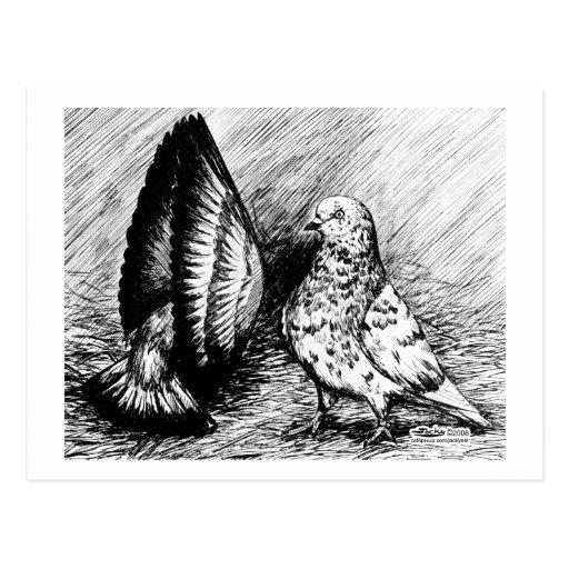 Parlor Roller Pigeons Postcard