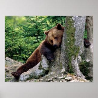 Paro de impresión del resto del oso de Brown Impresiones