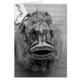 Parore Fish Skull Card