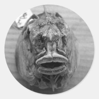Parore Fish Skull Classic Round Sticker