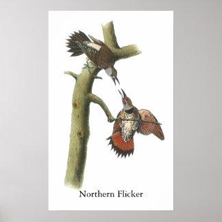 Parpadeo septentrional Juan Audubon Posters