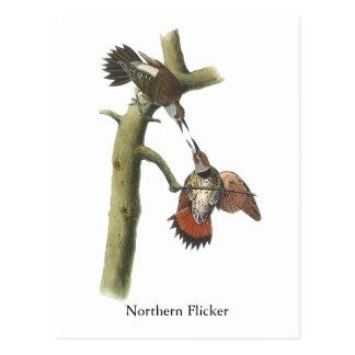 Parpadeo septentrional, Juan Audubon Tarjetas Postales