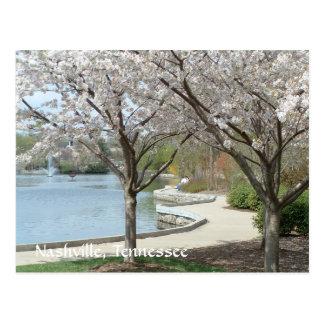 Parque centenario en la floración tarjeta postal