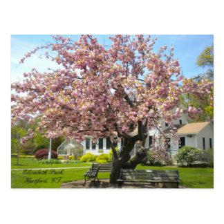 Parque de Elizabeth, Hartford, postal del CT