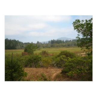 Parque de estado de Annadel - pantano de Ledson Tarjetas Postales