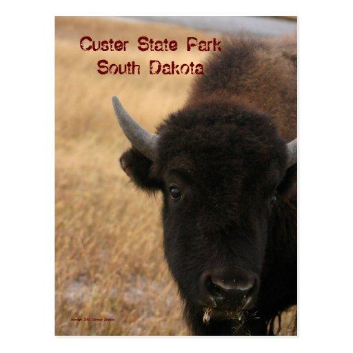 Parque de estado de Custer, postal de Dakota del S