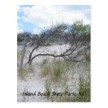 Parque de estado de la playa de la isla, postal de