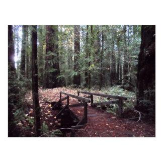 Parque de estado de las secoyas de Humboldt del Postales