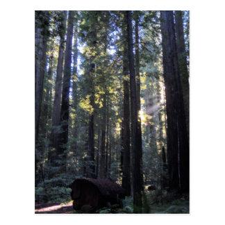 Parque de estado de las secoyas de Humboldt Postales