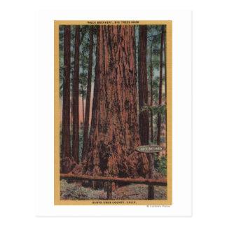 Parque de estado grande de los árboles, CA - árbol Postal