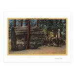 Parque de estado grande de los árboles de postal