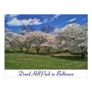Parque de la colina del druida en la primavera tarjeta postal