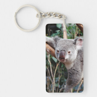Parque de la fauna de Featherdale, osos de koala