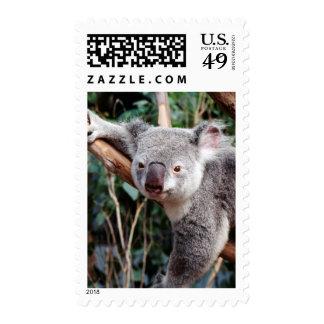 Parque de la fauna de Featherdale, osos de koala Sello