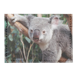 Parque de la fauna de Featherdale, osos de koala Tarjeteros Tyvek®
