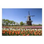 Parque de la isla del molino de viento con los tul fotografias
