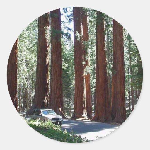 Parque de la secoya del coche del árbol pegatinas redondas
