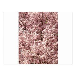 Parque del destino de la naturaleza del árbol de l postales