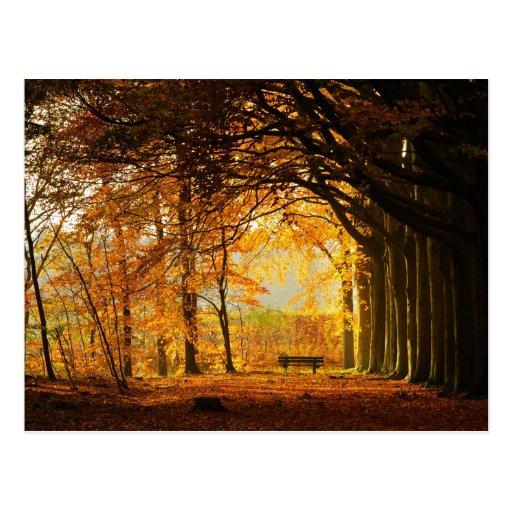 Parque del otoño postales