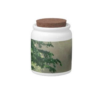 Parque del prado de la mañana del bosque jarras para caramelos