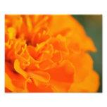 Parque floral fotografias