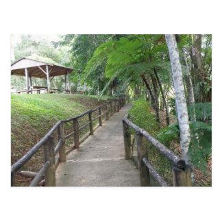 Parque Indigena Caguana Postcard