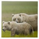 Parque nacional de Clark de los E.E.U.U., Alaska,  Azulejo Cuadrado Grande