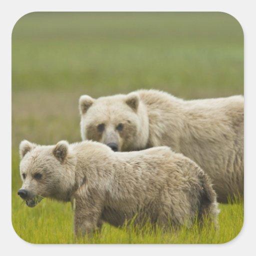 Parque nacional de Clark de los E.E.U.U., Alaska, Pegatina Cuadrada