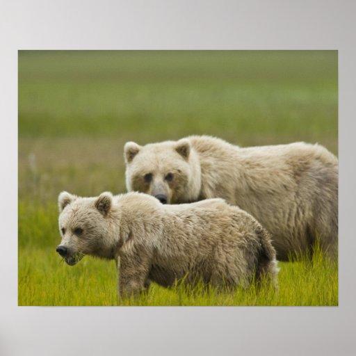 Parque nacional de Clark de los E.E.U.U., Alaska,  Póster