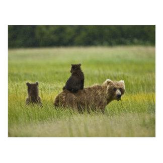 Parque nacional de Clark de los E.E.U.U., Alaska, Tarjeta Postal