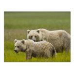 Parque nacional de Clark de los E.E.U.U., Alaska, Tarjetas Postales