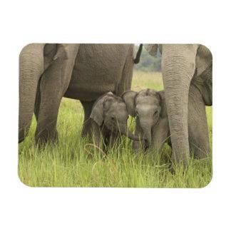 Parque nacional de Corbett Uttaranchal la India Imán De Vinilo